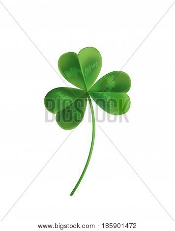 Three sheets realistic lucky clover leaves on a white background. Vector illustration. Green clover for St. Patrick's Day.