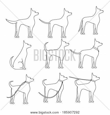 A dog sideways in full growth sketch in different poses. Walking with pet
