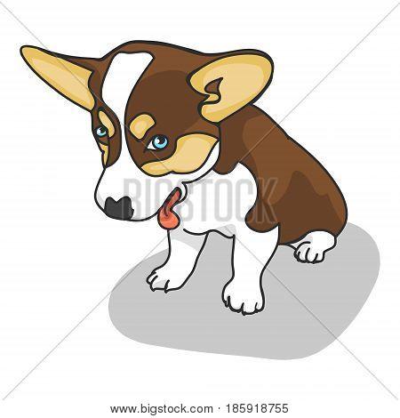 Cute puppy Corgi on a white background. Vector illustration