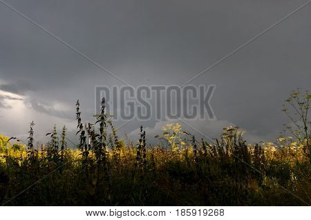 Ominous landscape. Sun illuminates small part of meadow under dark thunderstorm sky. In the foreground - silhouettes of meadow grasses.