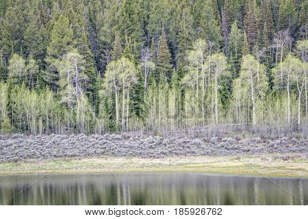 aspen, grover sagebrush, and spruce with water reflection, early spring scenery in Rocky Mountains, Colorado at Willow Creek Pass