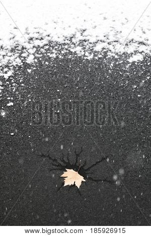 Frozen Lake With A Leaf