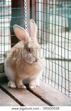 The Amusing Rabbit