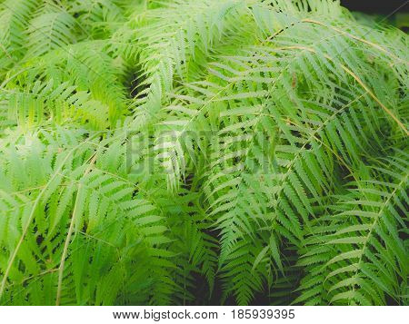 Ferns Picture