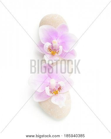 Two light pink orchids and stones  isolated on white background. Viewed from above.