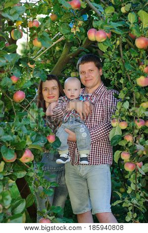 Happy parents father, mother and their child in apple garden. Outdoor fun for children. Healthy nutrition. Everyone is looking at the camera. Front view. Outdoor portrait. Happiness and harmony in family life. Family fun outside. Concept of happy family r