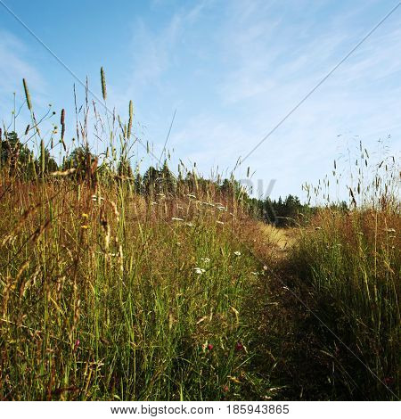 Pathway through the wildflower meadow. Sunny summer day. Aged photo. Walkway in the valley. Grassland. Island of Valaam Republic of Karelia Russia.