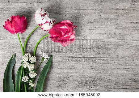 Tulips spring flowers on grey stone background with text space