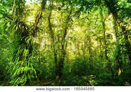 Incredible tropical forest view with sun flare in morning.