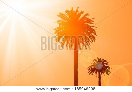Silhouette Of Two Palm Trees