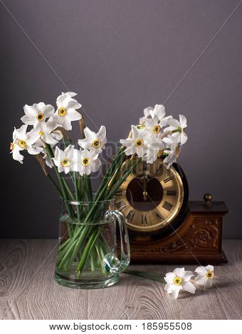 Still life with daffodils and old watch. Fresh daffodils in vase.