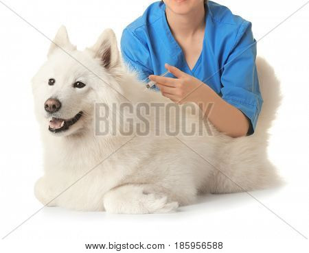 Veterinarian giving injection to dog on white background