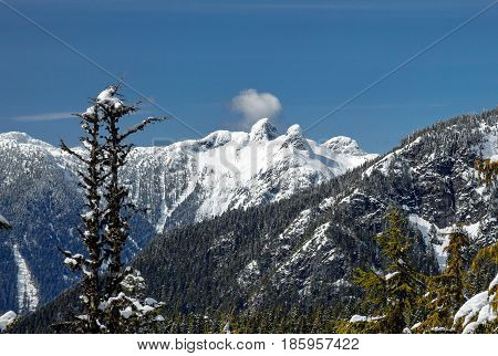 Winter forest in the mountains over Vancouver and snow-capped  Lions Peaks on  the background of blue sky. Grouse Mount, Vancouver, British, Columbia, Canada