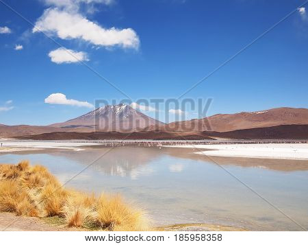Reflection of a volcano in the water of a lake with some flamingos and yellow grass in a landscape on the Altiplano at the border between Bolivia and Chile.