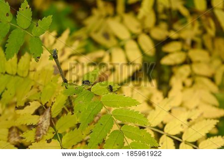 Autumn Early autumn Forest Forest Beetles Forest Insects Grove Leaves of the trees Tree Leaf Trees