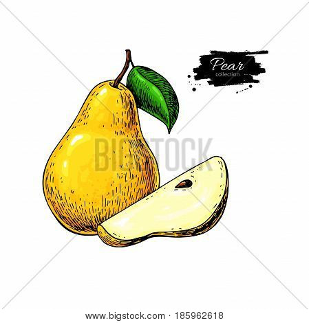 Pear vector drawing. Isolated hand drawn pear and sliced pieces.  Summer fruit artistic style illustration. Detailed bright vegetarian food. Great for label, poster, print, menu