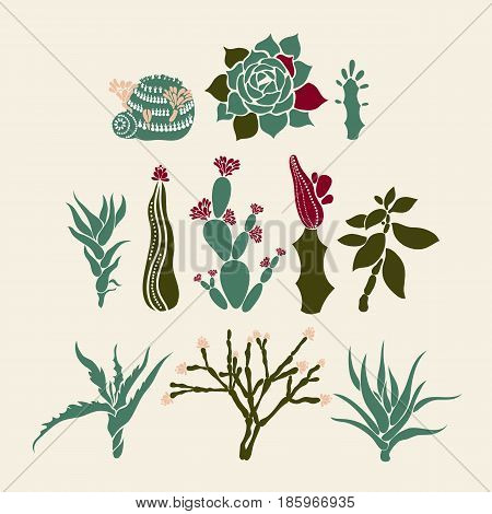 Mammillaria, Sempervivum, Euphorbia, Haworthia, Opuntia, Crassula, Aloe, Hatiora. Collection of succulents and cacti. Vector illustration.