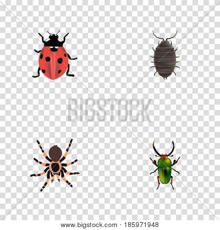 Realistic Insect, Ladybird, Dor And Other Vector Elements. Set Of Animal Realistic Symbols Also Includes Beetle, Tarantula, Insect Objects.