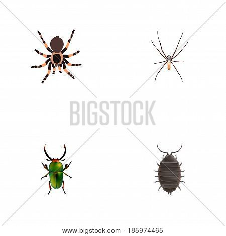 Realistic Dor, Spider, Insect And Other Vector Elements. Set Of Bug Realistic Symbols Also Includes Bug, Dor, Green Objects.
