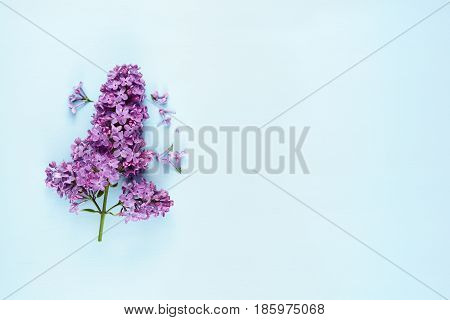 Violet lilac flowers on blue background with copy-space