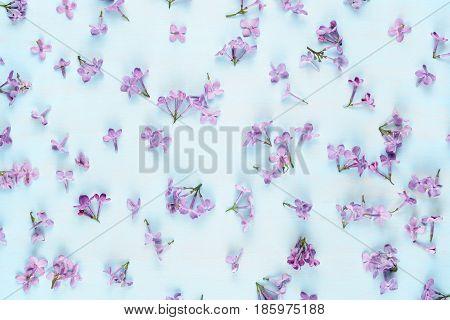 Violet lilac flowers on blue wooden background