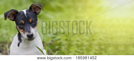 Website banner of a funny dog puppy