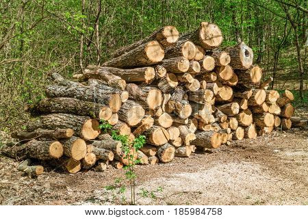 Heap of firewood in a forest stacks of woodpile