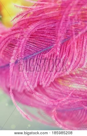 Beautiful abstract light and blurred soft background with purple feather. Macro image with mirror reflections.Beautiful and tender pink background or wallpaper.