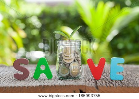 save money for investment concept money in jar and plant business growth