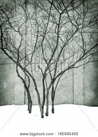 Grungy image of winter park with trees. Urban scene.