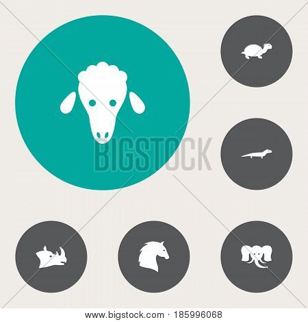 Set Of 6 Beast Icons Set.Collection Of Steed, Trunked Animal, Tortoise And Other Elements.