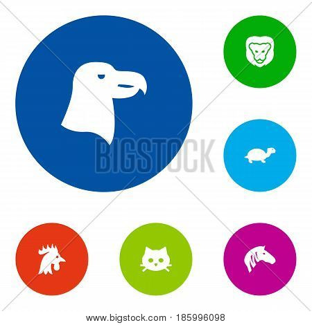 Set Of 6 Alive Icons Set.Collection Of Tortoise, Horse, Wildcat And Other Elements.