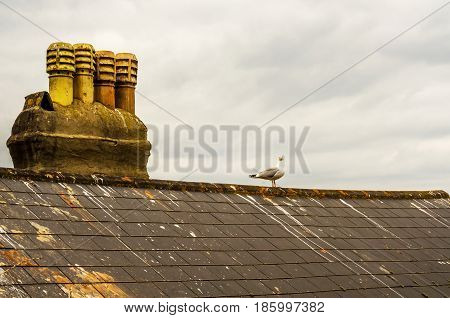 Bird on the chimney and roof of building covered with green moss seaside spot seen from the bird's eye view beautiful typical English architecture