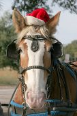 Merry horsemas poster