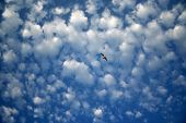 cumulus cloud and seagull in the sky poster