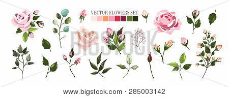 Set Of Pale Pink Rose Flowers And Green Leaves. Floral Bouquets, Branch, Arrangements For Wedding In