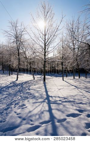 Sunbeams Passing Through Branches In Beautiful Romantic Snowy Landscape, Trees Shadows On Ground, Su