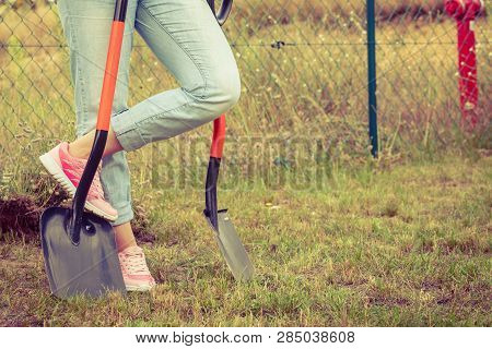 Woman Gardener Digging Hole In Ground Soil With Shovel. Yard Work Around The House