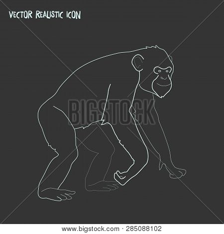Chimpanzee Icon Line Element. Vector Illustration Of Chimpanzee Icon Line Isolated On Clean Backgrou