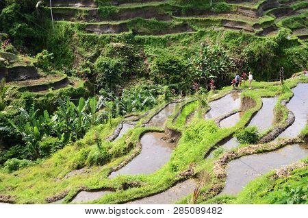 Bali, Indonesia- 14 Feb, 2019: Tegalalang Rice Terraces In Ubud, Bali. Tegalalang Rice Terrace Is On