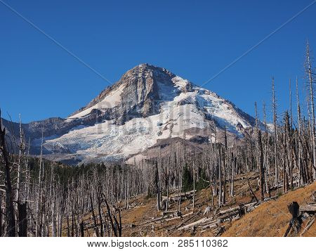 North Face Of Mount Hood And Eliot Glacier From Cloud Cap Road In The Mount Hood Wilderness, Oregon.