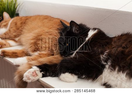 Two cats, auburn and black and white, are sleeping peacefully on a warm battery, huddling together. Friendship of animals. Winter heating season poster