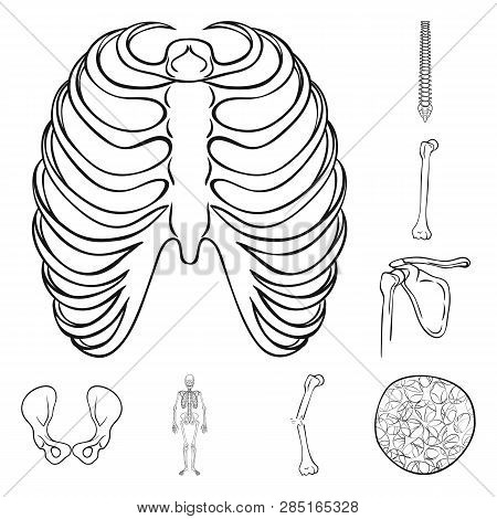Breastbone Images Illustrations Vectors Free