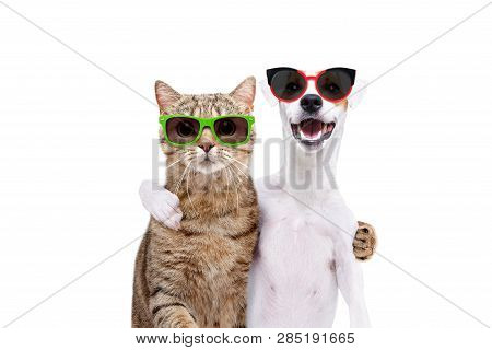 Portrait Of A Dog Jack Russell Terrier And Cat Scottish Straight In Sunglasses Hugging Each Other Is
