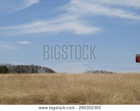 Tall Prairie Grass Rising Upward On A Hill Side Of Tree Lines With Blue Sky And Whispy Clouds. Copy