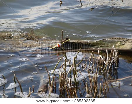 A Lost Fishing Bob On A Tree Limb Floating Along A Lake Shore Line With Foam And Reed Beds Rising Ou