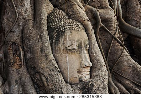 poster of Buddha Head in the root trees.Head of Sandstone Buddha in The Tree Roots at Wat Mahathat, Ayutthaya, Thailand Buddha Head in the root trees.Head of Sandstone Buddha in The Tree Roots at Wat Mahathat, Ayutthaya, Thailand