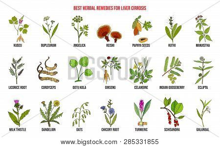 Best Herbal Remedies For Liver Cirrosis. Hand Drawn Set Of Medicinal Herbs