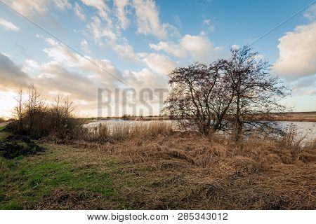 Bare Tree On The Bank Of A Creek In A Dutch Nature Reserve At The End Of A Sunny Day In The Winter S