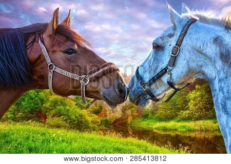 Black Horse And White Horse On A Beautiful Meadow